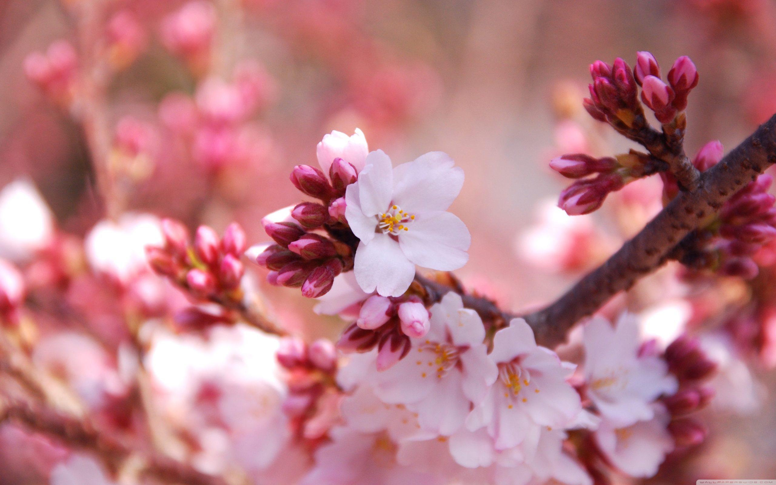 Thờ Phượng Chúa Nhật Ngày 14 Tháng 2, 2021: Cửa Phước – Đường Phước