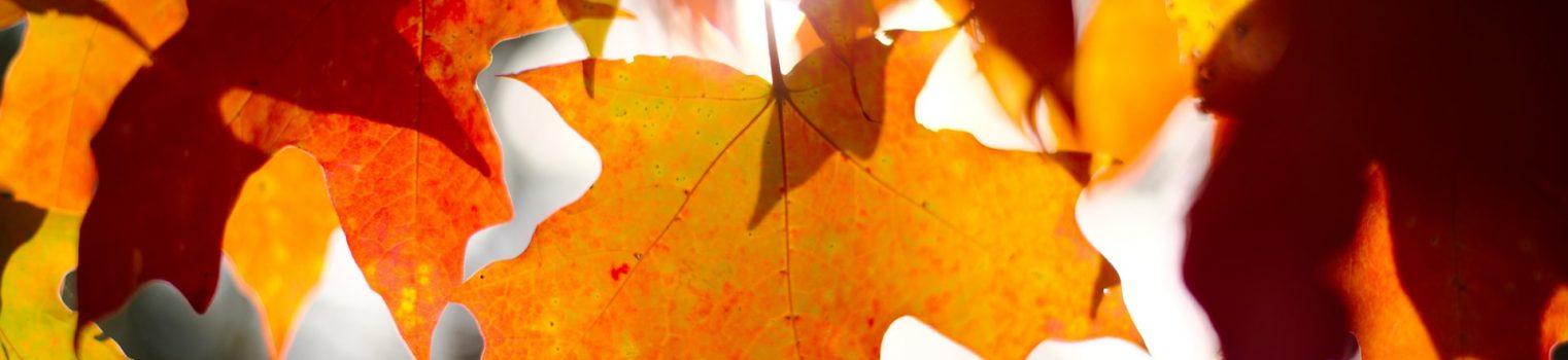 Thờ Phượng Chúa Nhật Ngày 17 Tháng 10, 2021: Đức Tin Vờ Vĩnh